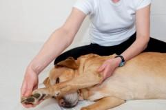 Hunde-Seminare
