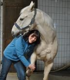 Pferde-Seminare